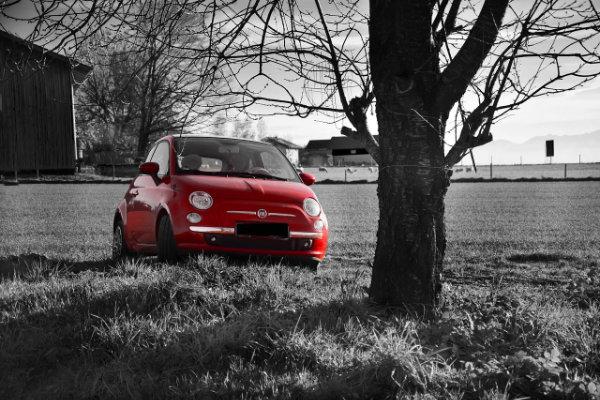 Schwarz-weiß-Bild eines Feldes mit Baum und einem roten Fiat 500
